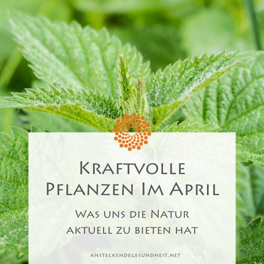 Kraftvolle Pflanzen im April