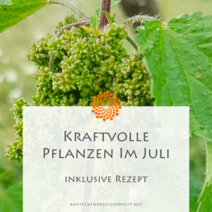 Kraftvolle Pflanzen im Juli