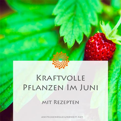 Kraftvolle Pflanzen im Juni + Rezepte