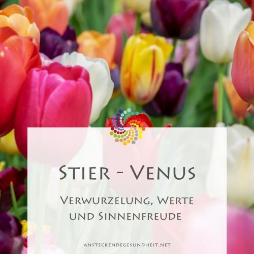 Stier-Venus-Urprinzip